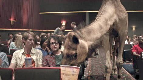 cine camel