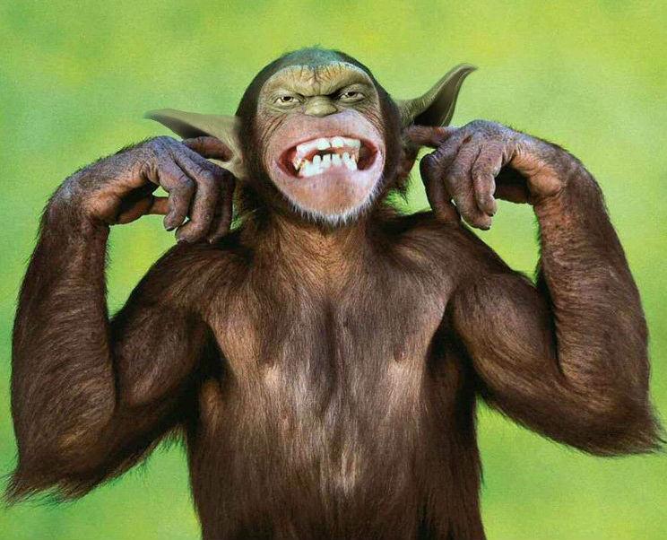 yoda monkey