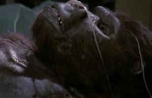 King-Kong-Lives-plano-critico