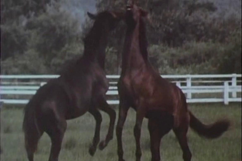 uma_no_uta_tv-canção do cavalo song of the horse plano critico