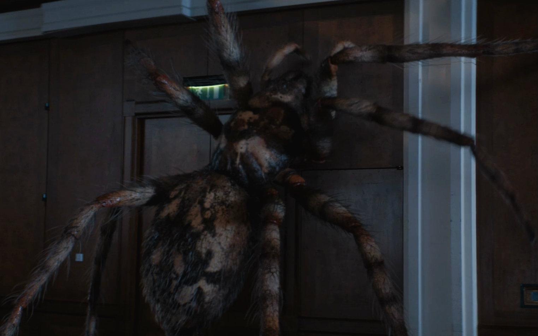 plano criticoArachnids in the UK aranhas doctor whoArachnids in the UK
